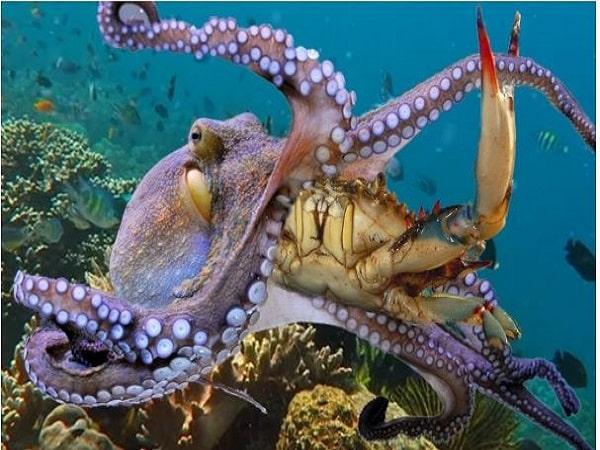 mơ thấy bạch tuộc bắt mồi