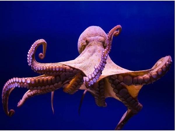 Nằm mơ thấy bạch tuộc đánh số mấy