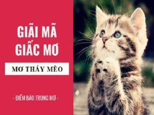 Mơ thấy con mèo điềm báo điều gì? giải mã giấc mơ thấy con mèo
