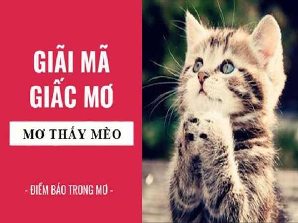 Mơ thấy con mèo điềm báo điều gì