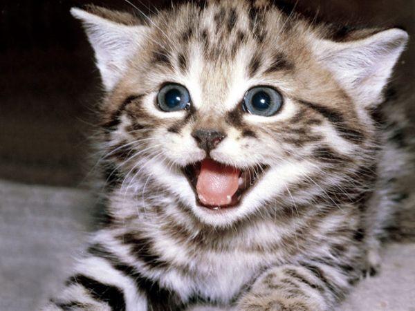 Nằm mơ thấy mèo cắn chơi xổ số con gì may mắn