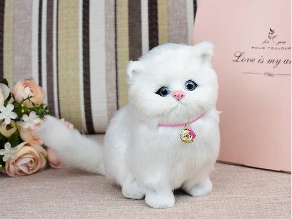 Nằm mơ thấy mèo trắng có điềm báo gì tốt hay xấu