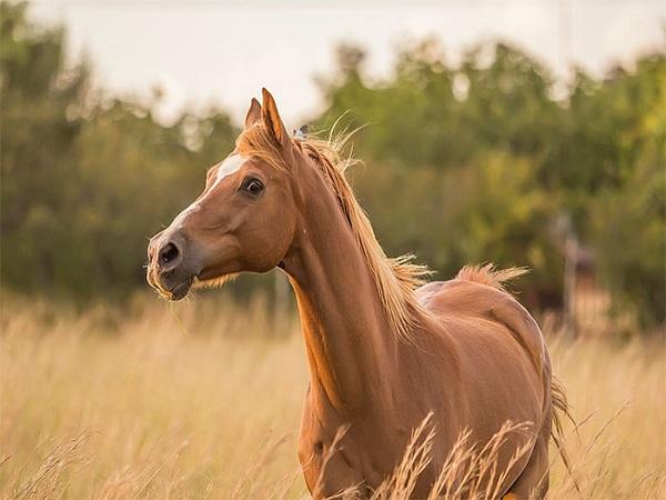 nằm mơ thấy ngựa đánh con gì chuẩn