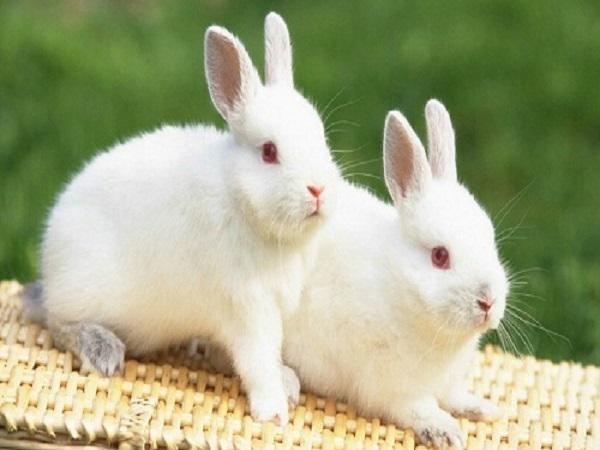 nằm mơ thấy thỏ đánh con gì