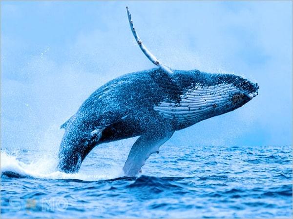 nằm mơ thấy cá voi đánh con gì?