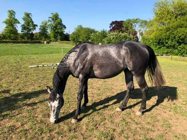 Nằm mơ thấy ngựa có ý nghĩa gì trong cuộc sống
