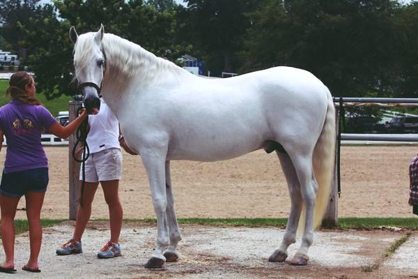 Giải mã giấc nằm mơ thấy con ngựa trắng là điềm báo trước gì